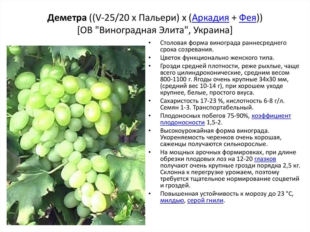 Виноград ливия: описание сорта, фото, посадка и уход, отзывы