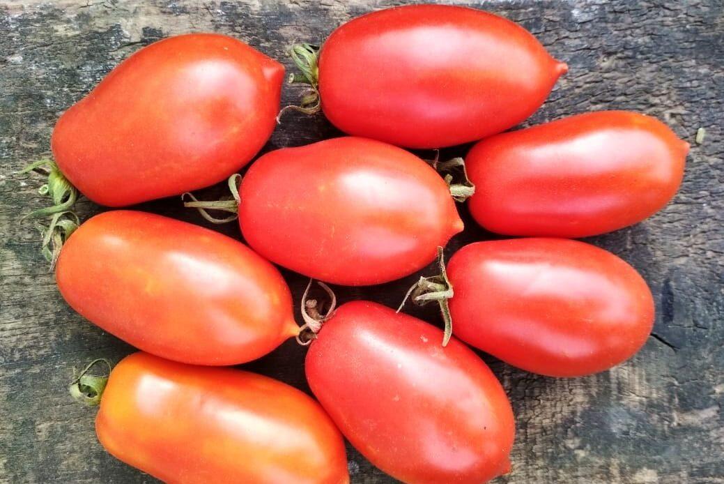 """Томат """"красавчик f1"""": характеристика и описание сорта помидор с фото, отзывы об урожайности"""