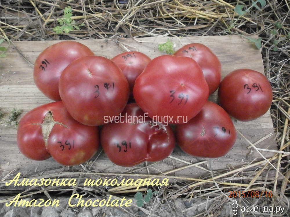 Томат шоколадный: описание сорта, фото, отзывы, характеристика плодов и урожайность, достоинства и недостатки