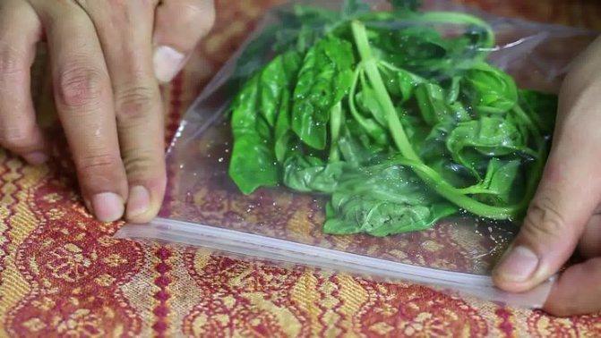 Как заморозить на зиму базилик: цельный, измельчённый, паста с маслом