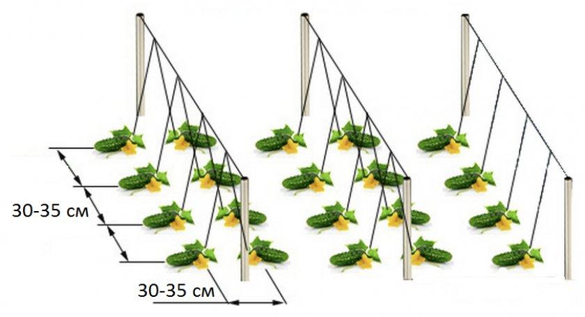 Посадка огурцов в открытый грунт - выбор места на участке, подготовка земли, уход и правильный полив