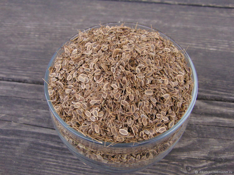Семена укропа: лечебные свойства и противопоказания, рецепты народной медицины, отзывы