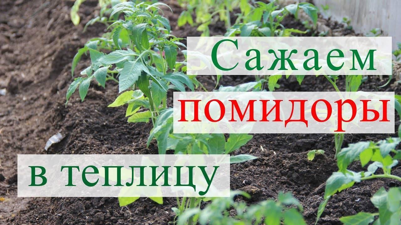 Когда сажать помидоры на рассаду в 2020 году в украине