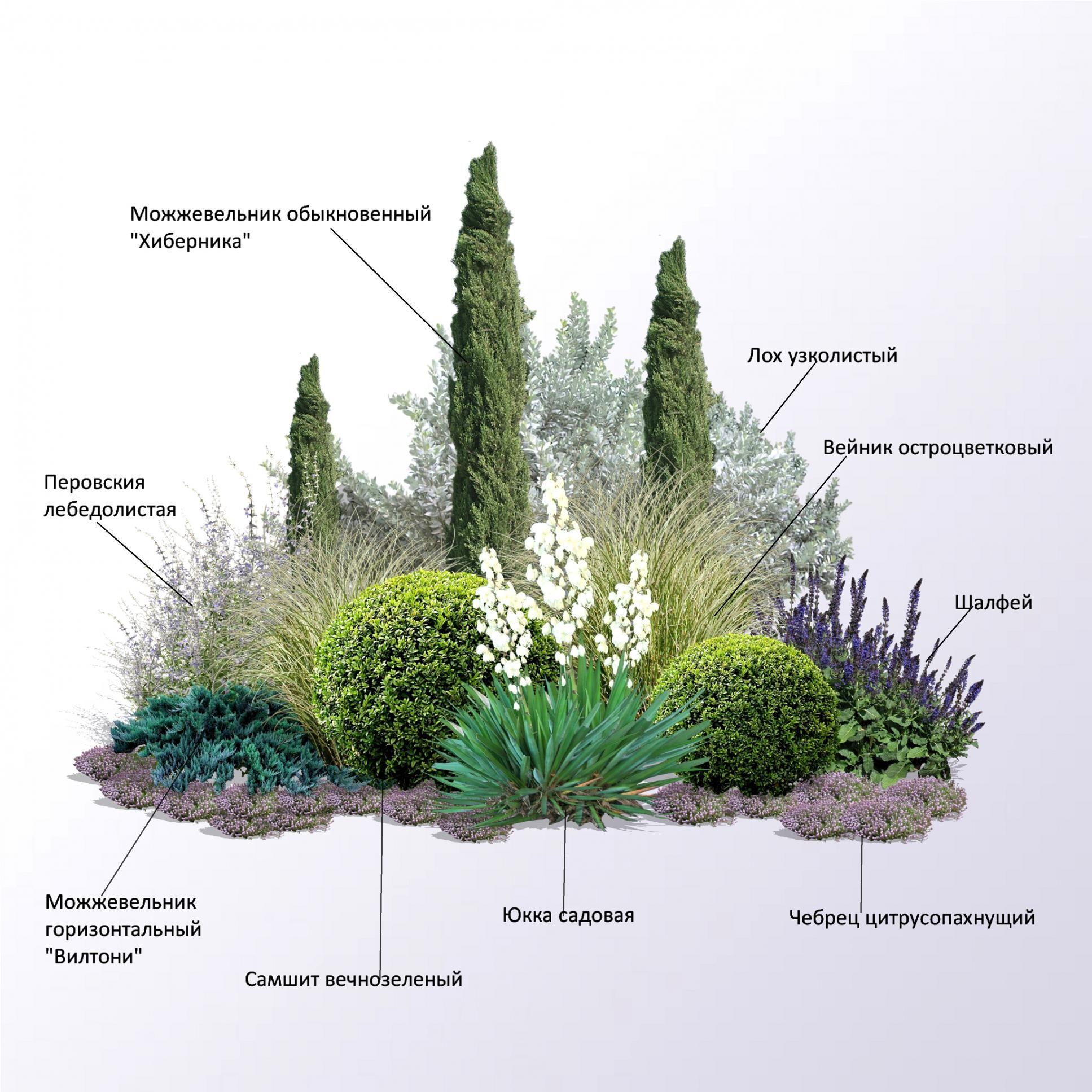 Общие правила составления композиций из комнатных растений.