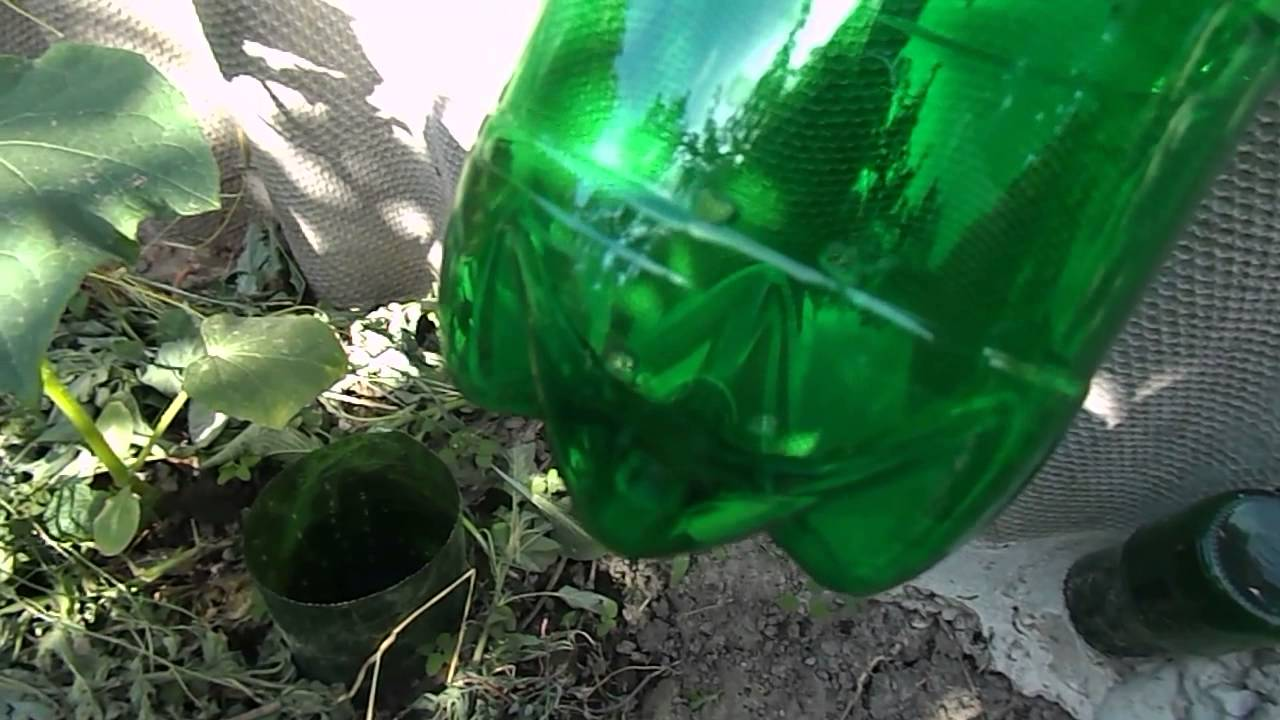 Как организовать подземный полив в теплице с помощью вкопанных пластиковых бутылок?