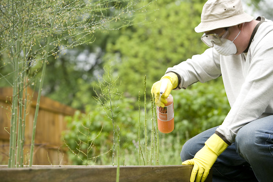 Уничтожение вредителей на комнатных растениях.