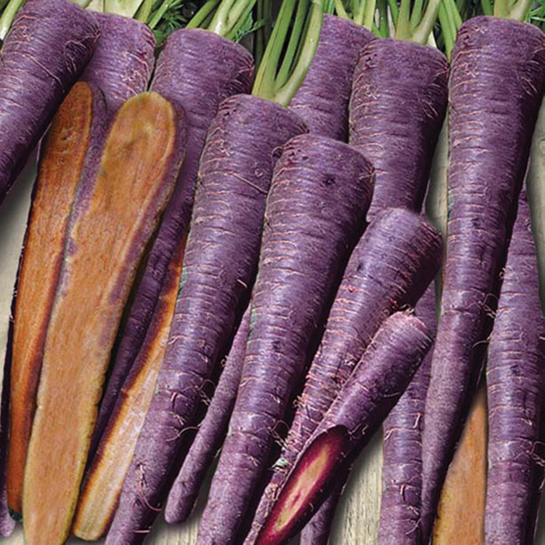 Фиолетовая морковь: шоколадный заяц f1, карамель, пурпур, сиреневая королева, семена, синяя, описание сортов и гибридов, краткая история и отзывы