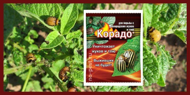 Корадо (инсектицид): инструкция по применению, состав и свойства