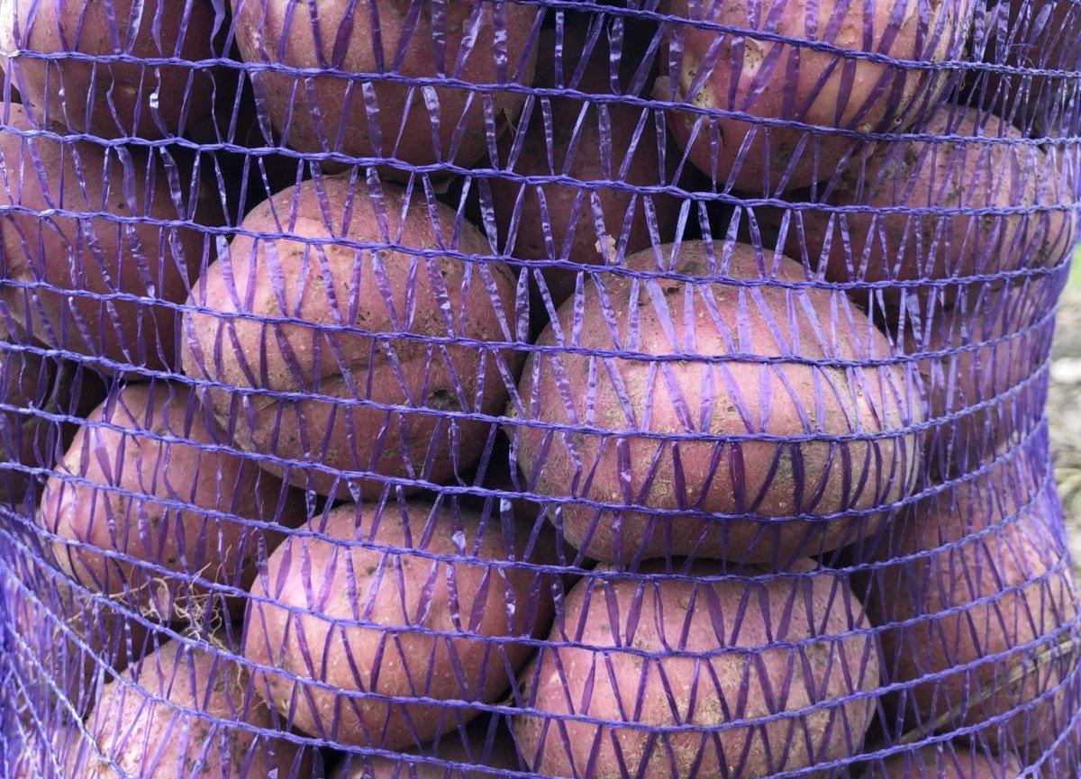 Картофель лабелла: описание сорта, фото, характеристика, отзывы