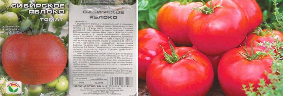 """Томат """"сибирское яблоко"""": характеристика и описание сорта, рекомендации по выращиванию и урожайность помидор русский фермер"""