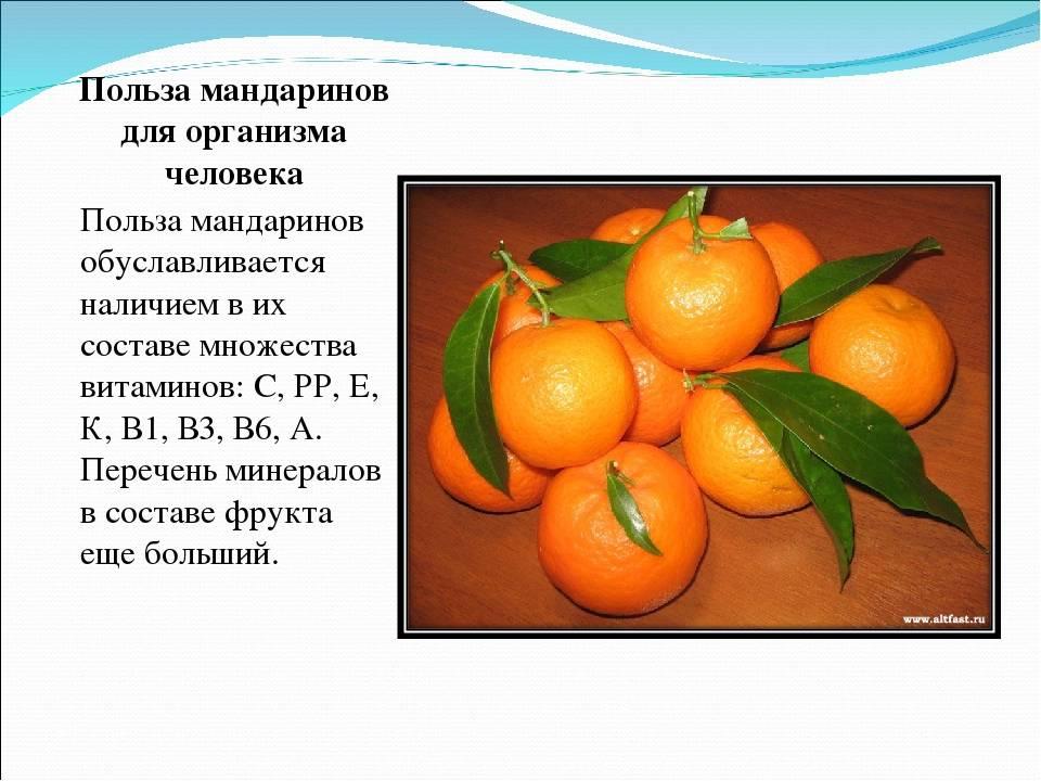 Мандарины – состав, полезные свойства и вред для здоровья