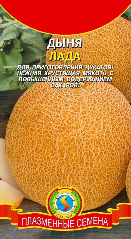 Посадка дыни, в том числе семенами в открытый грунт, а также особенности в беларуси, на урале, в средней полосе россии, подмосковье