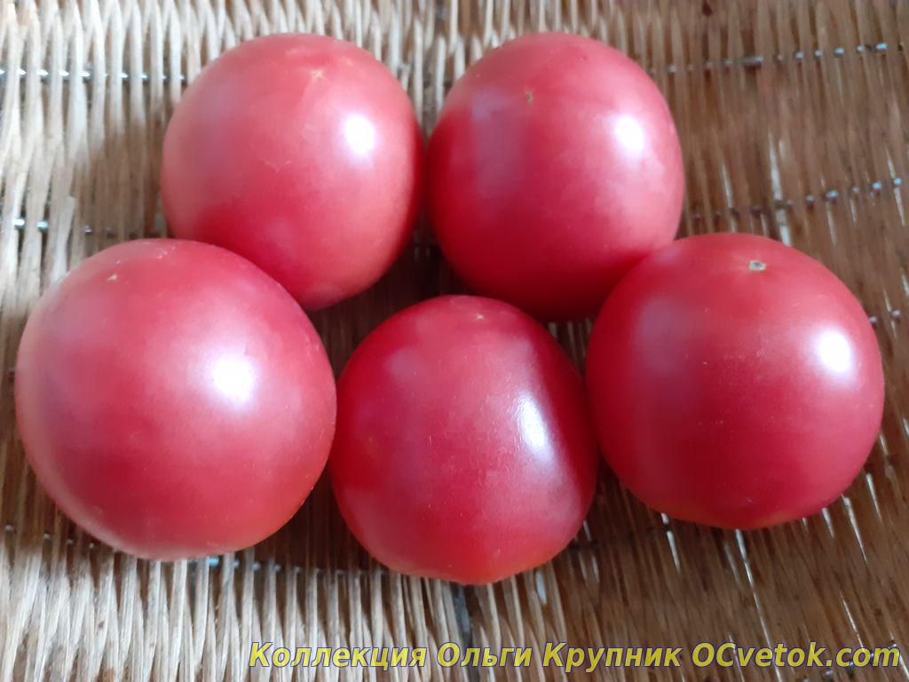 Садовая жемчужина розовая томат отзывы