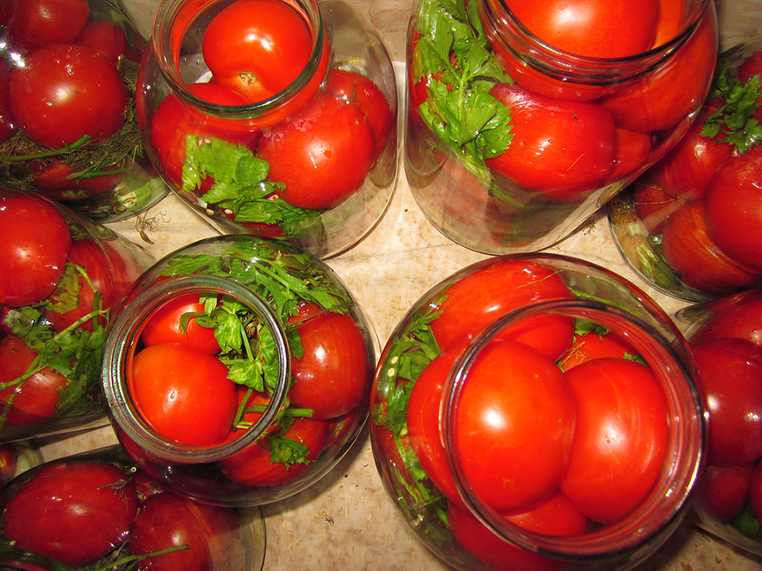 Какие сорта помидоров лучше для засолки? | фазенда рф