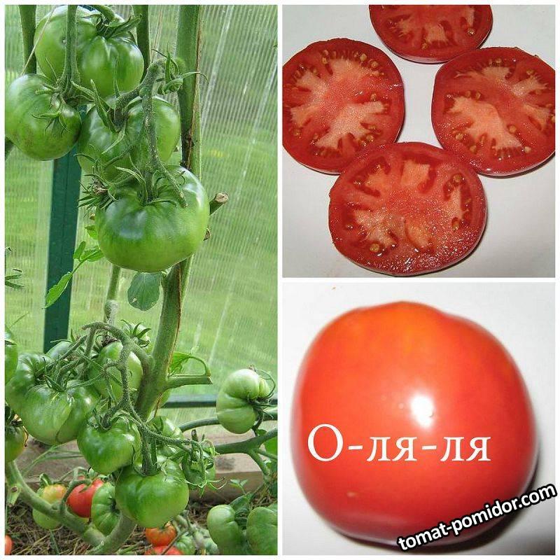 Томат «о-ля-ля-ля»: описание сорта, фото и основные характеристики помидоры русский фермер