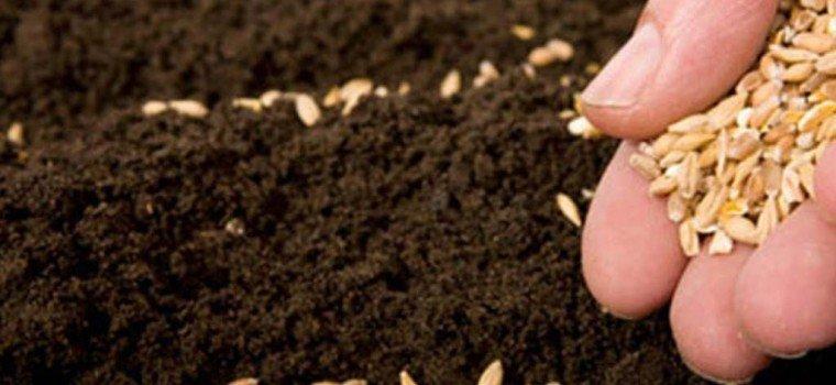 Посадка огурцов: гид для начинающих и секреты первого удачного урожая