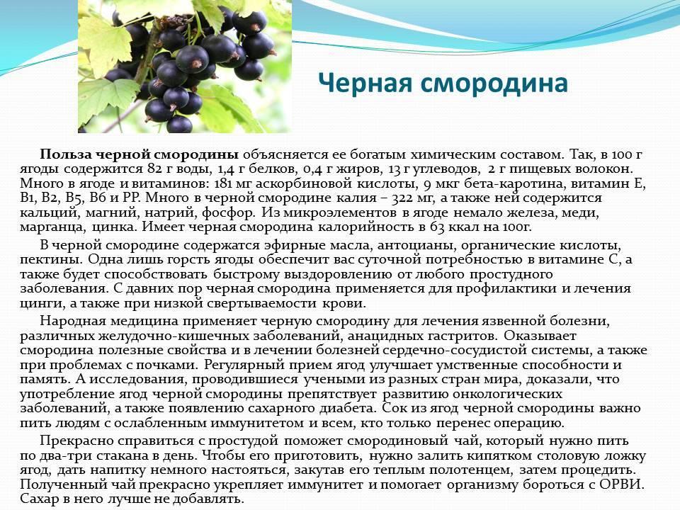 Белая смородина: полезные свойства и противопоказания, вред для здоровья, рецепты