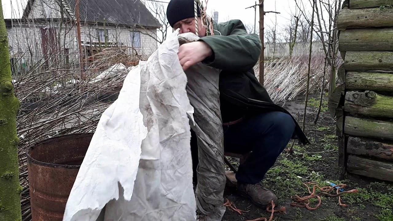 Как и чем укрывать молодые плодовые деревья на зиму: нужно ли обматывать стволы, фото
