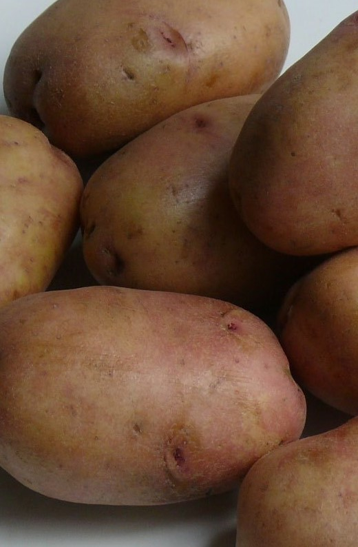 Картофель голубизна: описание сорта, достоинства и недостатки