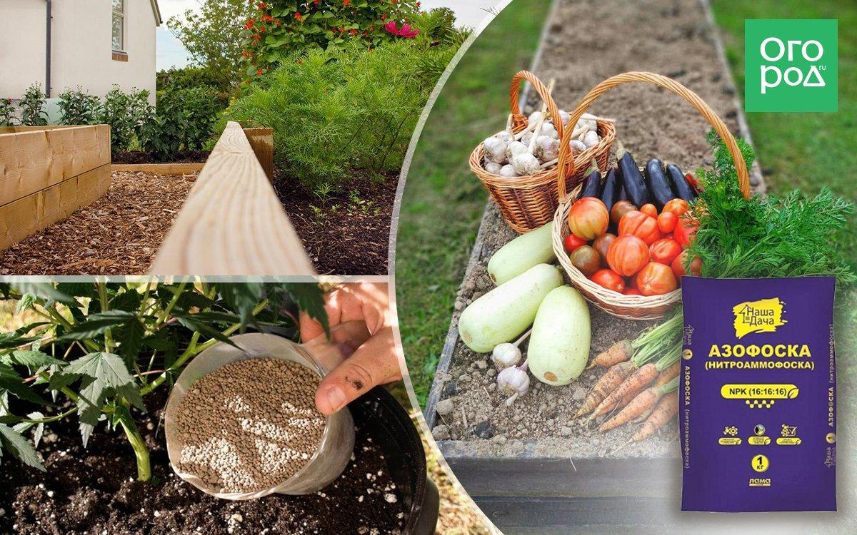 Подкормка огурцов в теплице: виды удобрений, сроки, дозировки