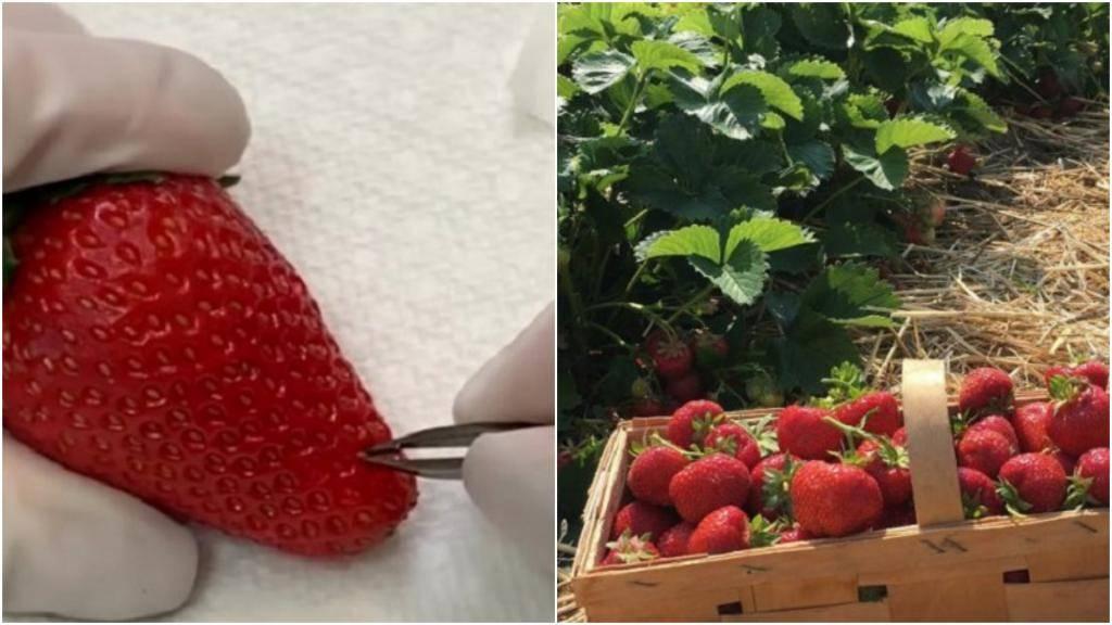 Как вырастить клубнику из семян в домашних условиях на рассаду, в том числе стратификация семян