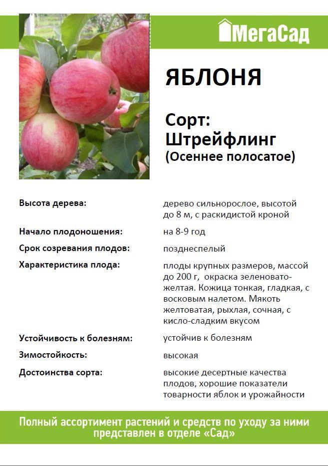 Яблоня штрейфлинг – 8 особенностей и 10 советов по посадке и уходу