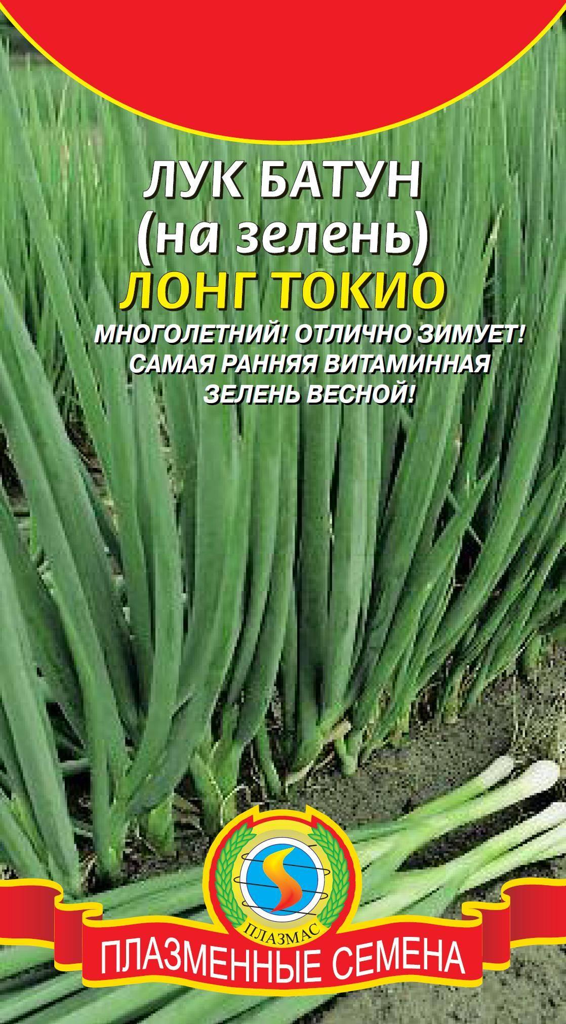 Лук-батун: посадка и уход в открытом грунте, выращивание из семян, также когда сеять весной, как правильно сажать, часто ли срезать, каким образом убирать и хранить?