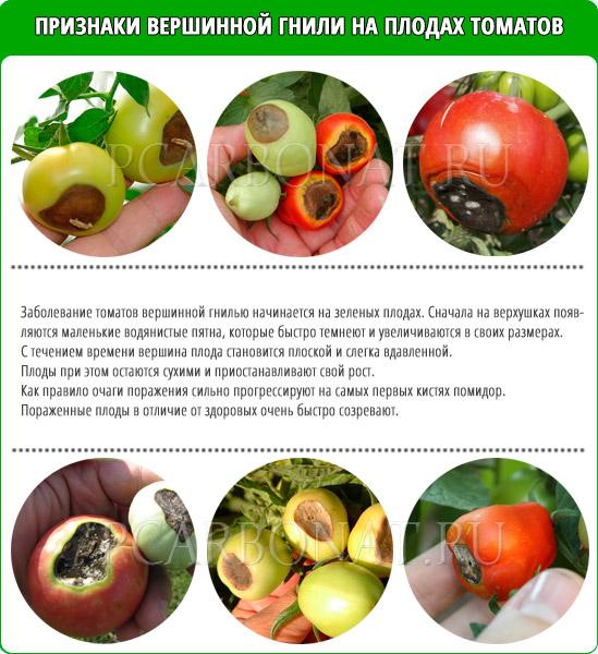 Вершинная гниль томатов – спасаем урожай (причины, признаки и лечение)