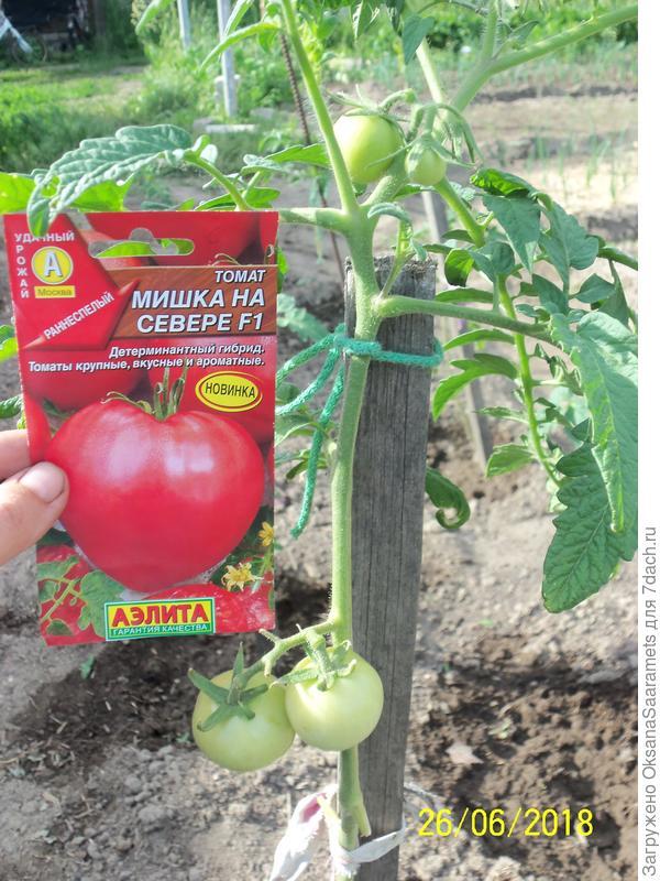 Томат крайний север: описание и характеристика сорта, отзывы, фото, урожайность   tomatland.ru