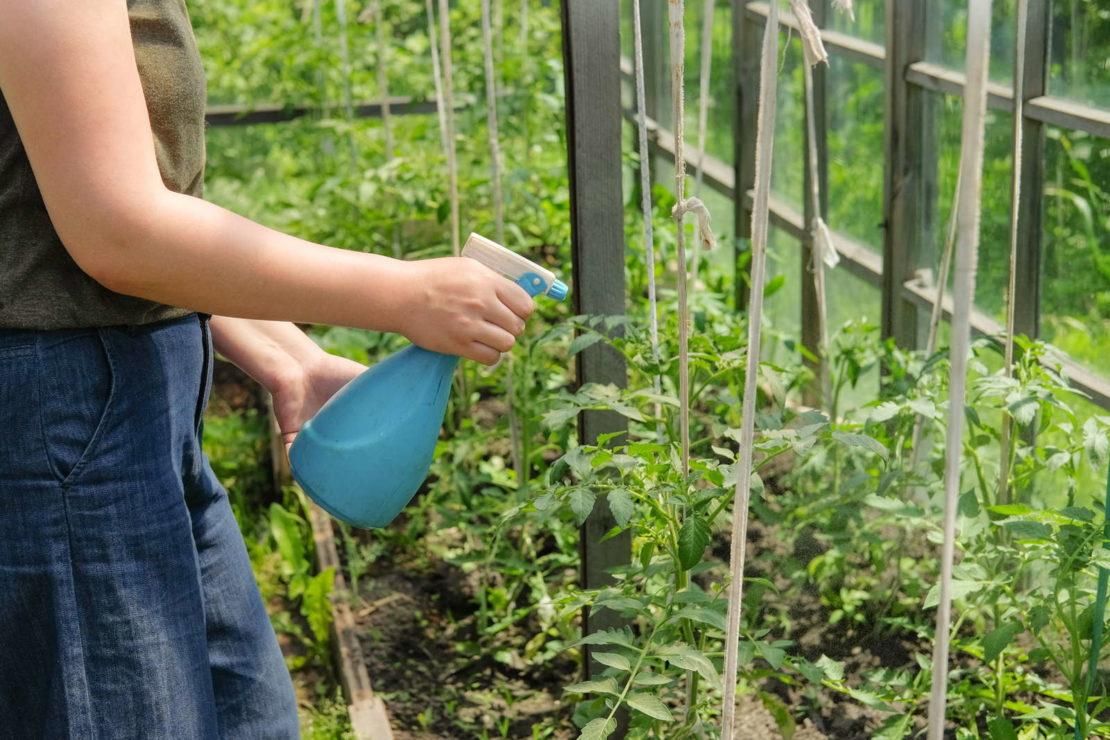 Как вырастить растения в закрытом грунте - посадки в теплице