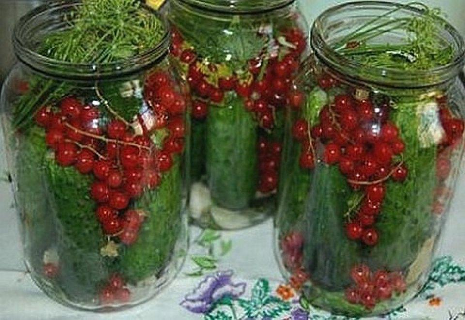 Маринованные огурцы с красной смородиной - рецепт с фотографиями - patee. рецепты