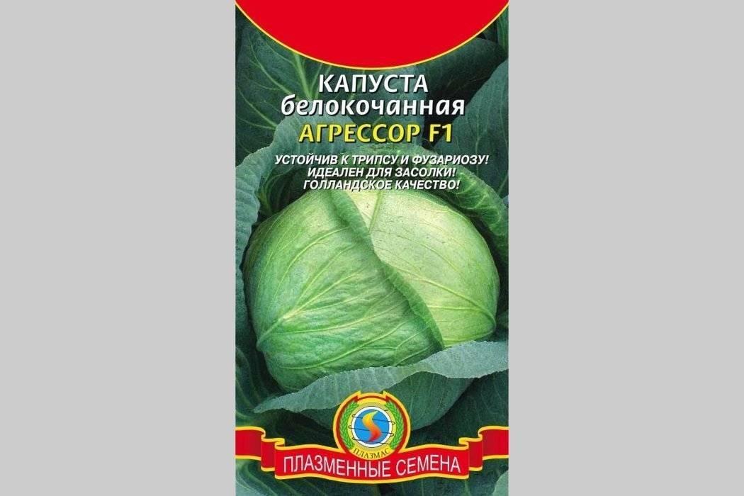 Капуста мегатон f1: топ отзывы, секреты выращивания с фото