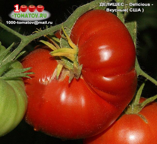 Лучшие сорта высокорослых томатов для теплицы и открытого грунта: топ-35 индетерминантных помидоров