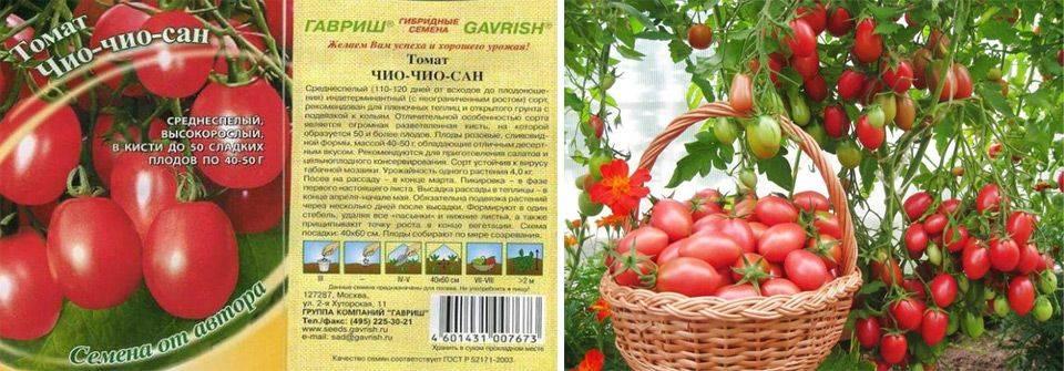 Томат чио чио сан: отзывы, урожайность, характеристика и описание сорта