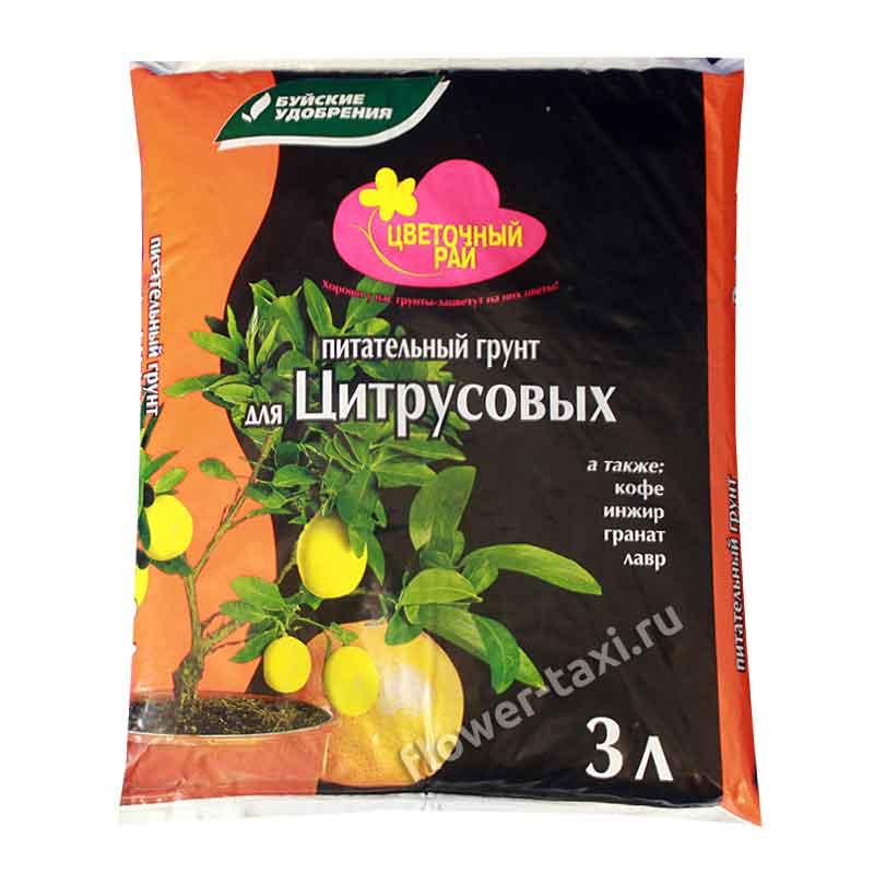 Правильный состав почвы для комнатной герани: что любит цветок и подойдет ли универсальный грунт?