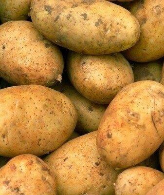 Картофель бриз: описание и характеристика сорта, отзывы (фото)