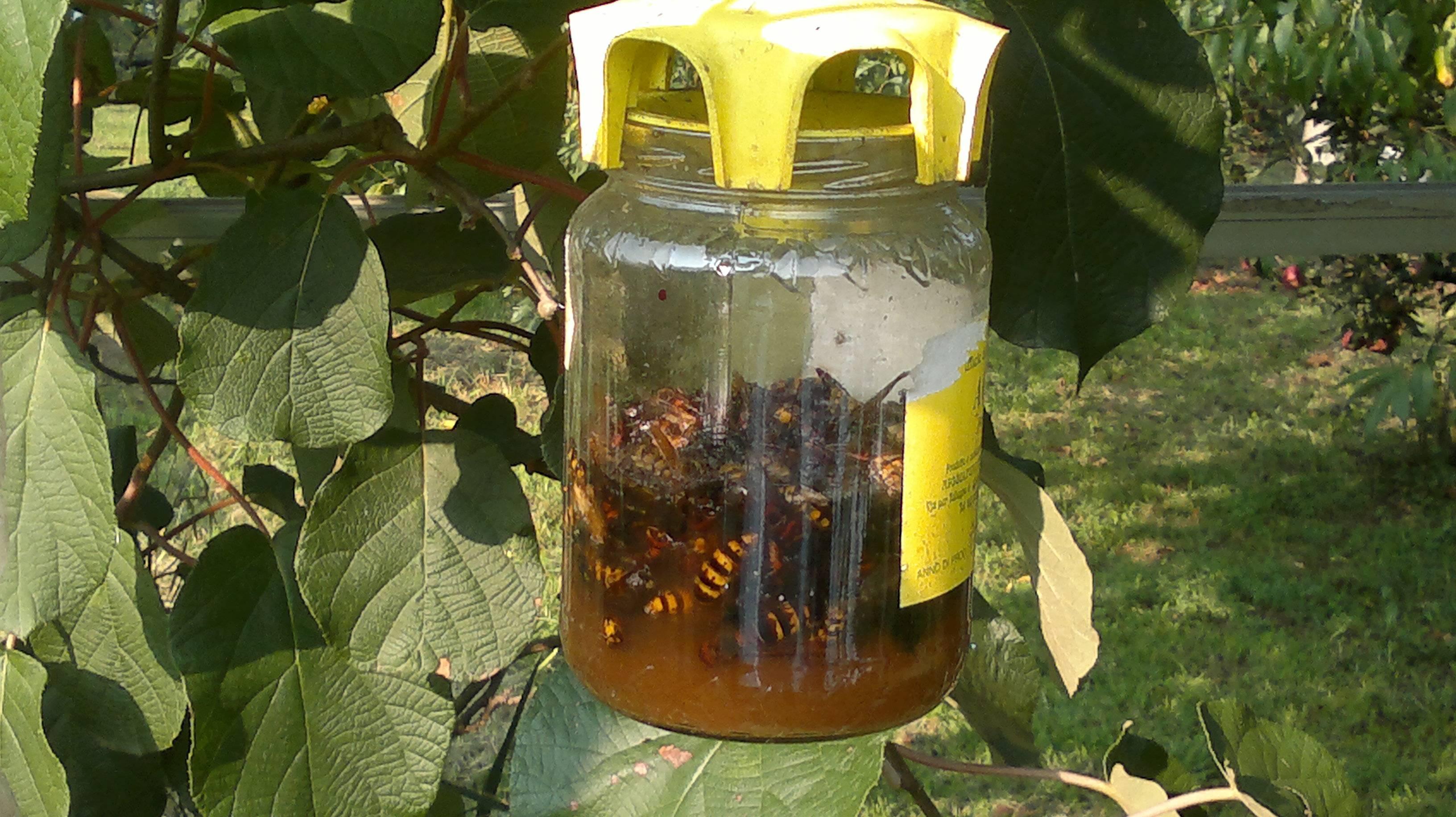 Как бороться с пчелами соседей