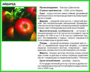 Яблоня чемпион: описание сорта, фото, отзывы, калорийность, характеристика, посадка