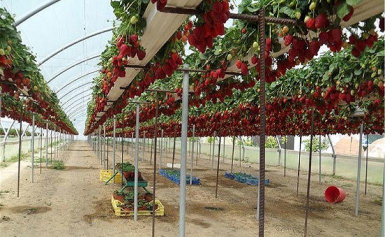 Новые технологии выращивания томатов