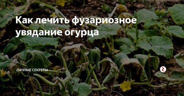 Лечение кисты народными средствами   компетентно о здоровье на ilive