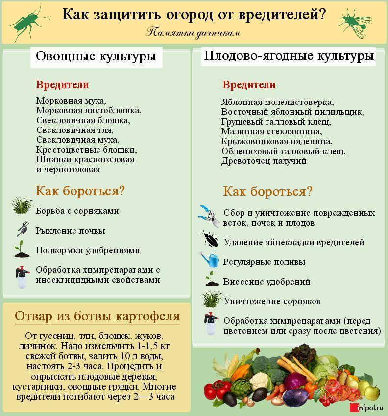 Болезни и вредители листьев груши (18 фото): описание болезней и способы лечения грушевых деревьев, пупырышки как признак заболевания