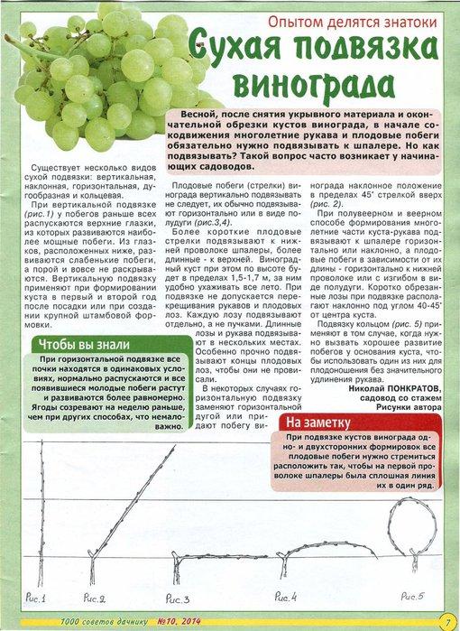 Как подвязать виноград весной: фото, способы сделать правильно, советы для начинающих