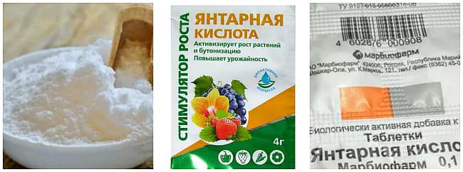 Янтарная кислота для растений – показания и инструкция по применению в огороде