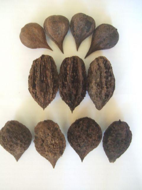 Характеристика ланкастерского ореха