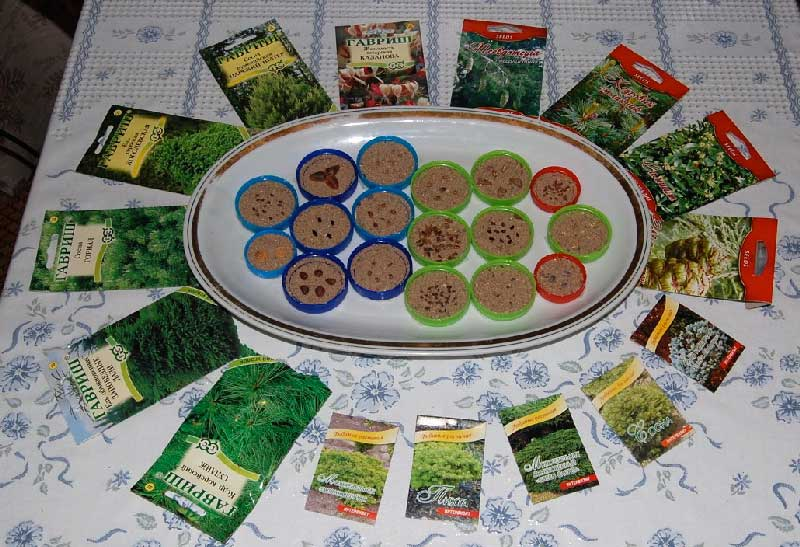 Предпосевная стратификация семян   сад и огород