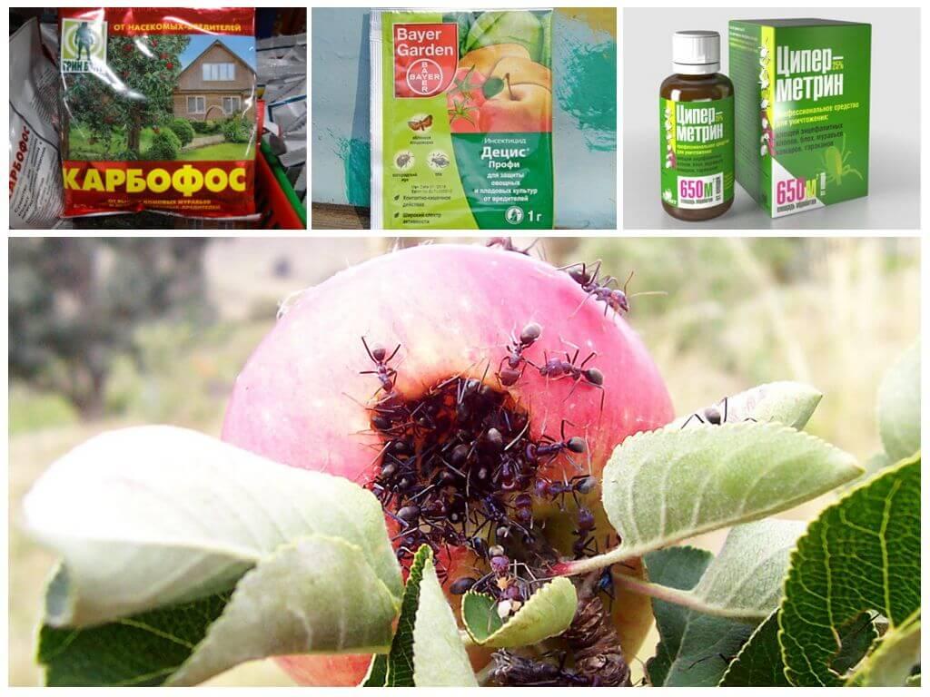 Щитовка на яблонях и других растениях: эффективные методы борьбы и профилактики