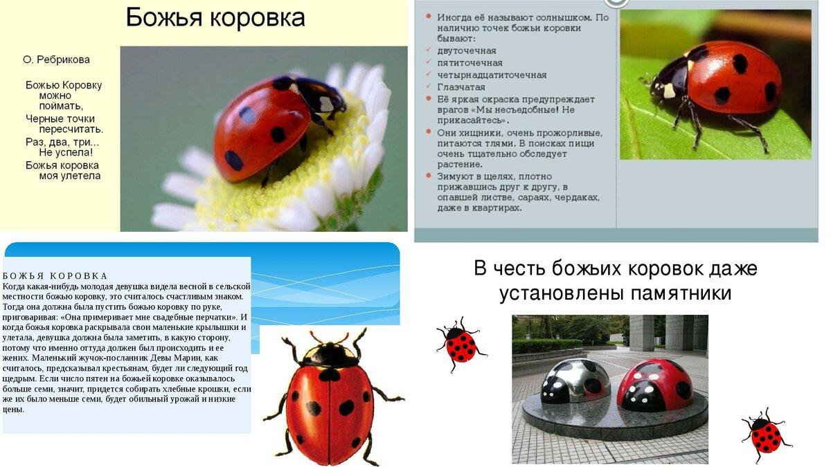Домики для насекомых или как привлечь на участок полезных насекомых.