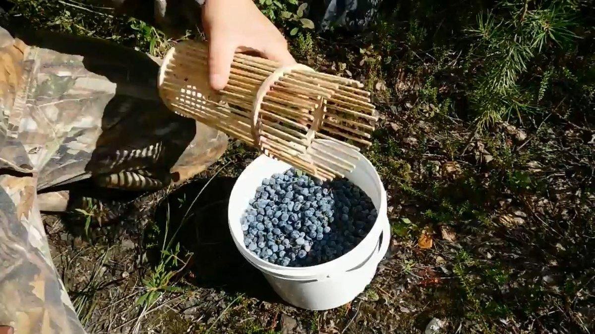 Комбайн для сбора ягод своими руками: чертежи приспособлений из пластиковых бутылок. как сделать комбайн для крыжовника и земляники?