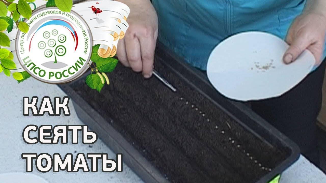 Сроки, когда сажать на рассаду помидоры для подмосковья и 2021 года лунный календарь посева