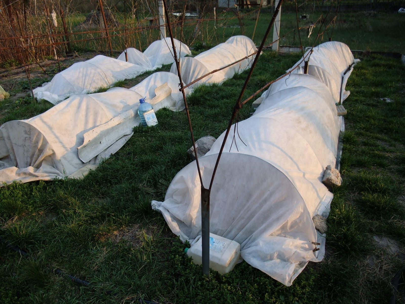 Уход за яблоней осенью и правильная подготовка к зиме